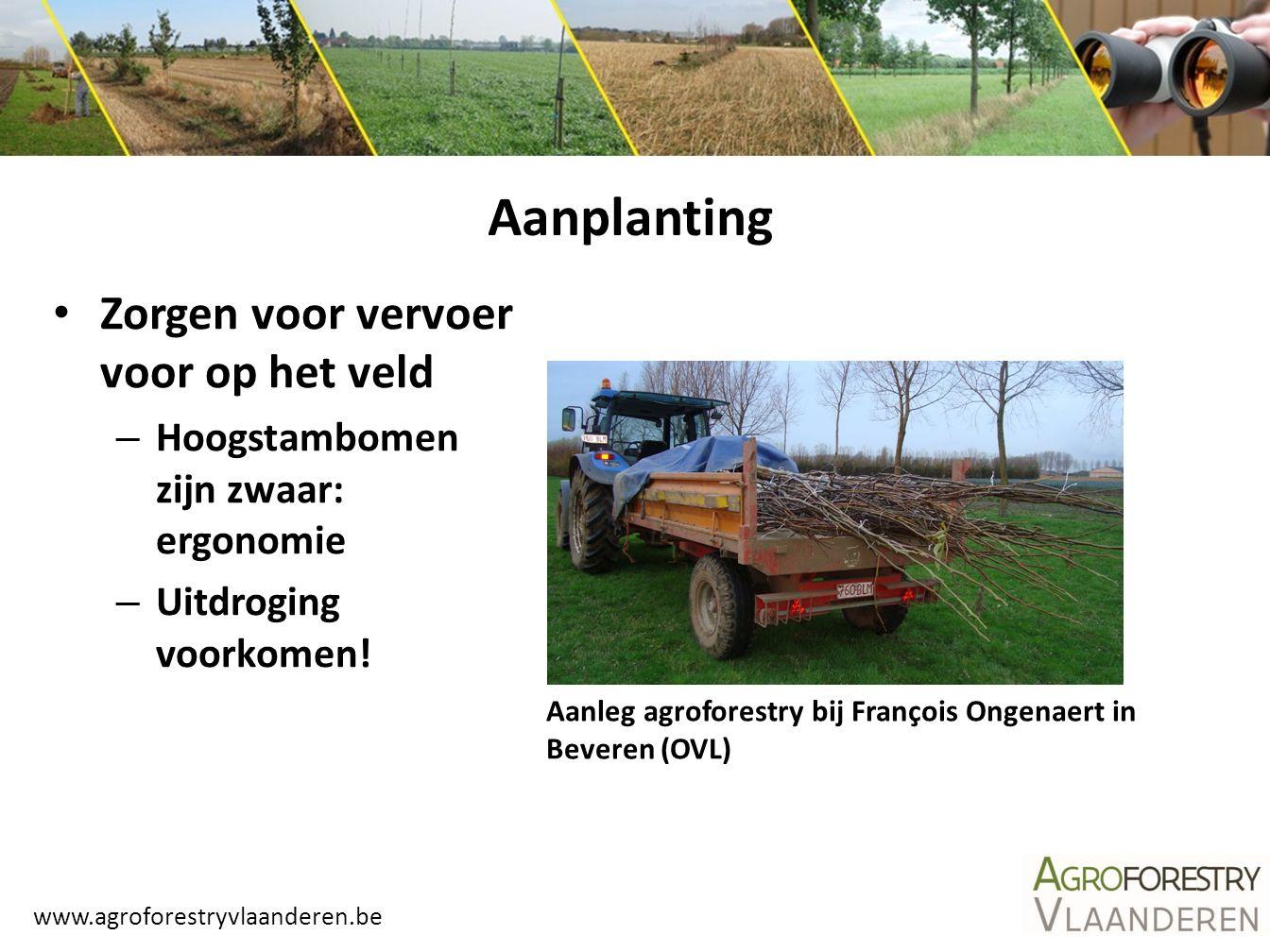 www.agroforestryvlaanderen.be Aanleg agroforestry bij François Ongenaert in Beveren (OVL) Aanplanting Zorgen voor vervoer voor op het veld – Hoogstamb