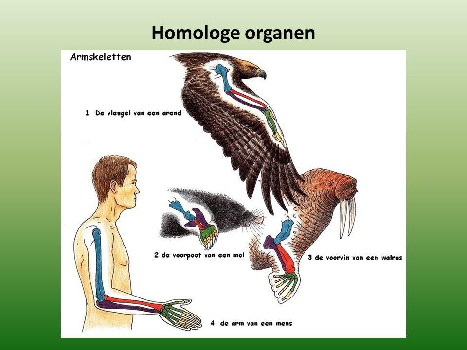 Homologe organen