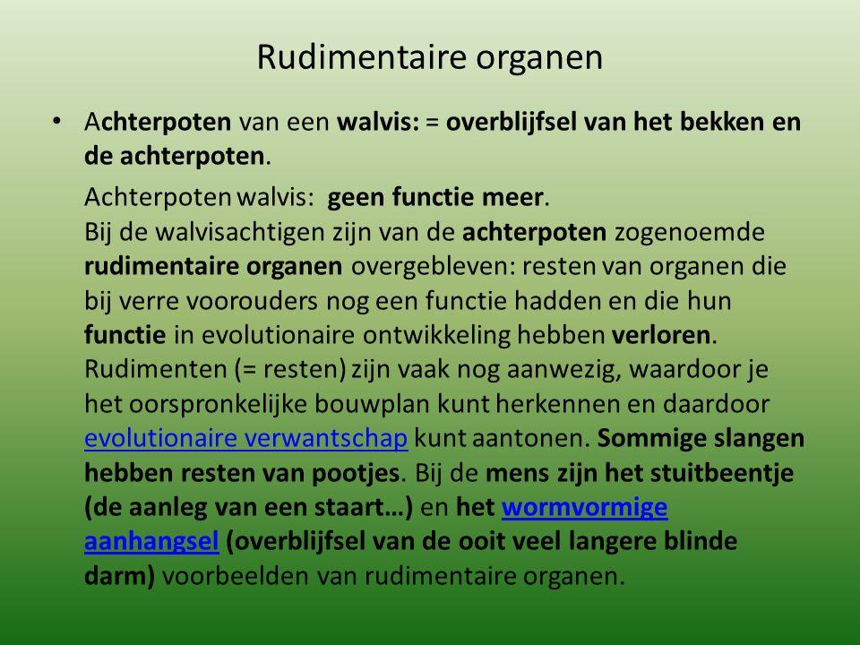 Rudimentaire organen Achterpoten van een walvis: = overblijfsel van het bekken en de achterpoten. Achterpoten walvis: geen functie meer. Bij de walvis