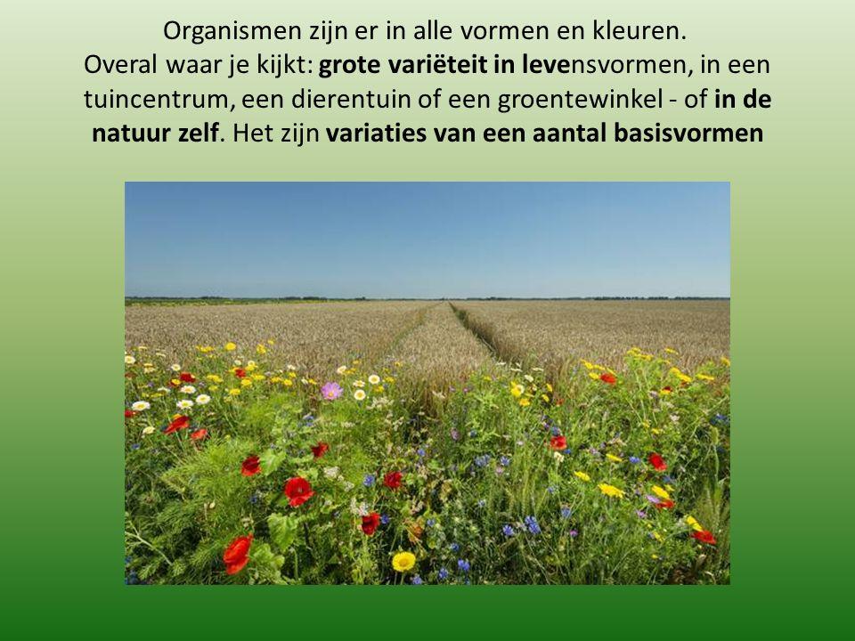 Organismen zijn er in alle vormen en kleuren.