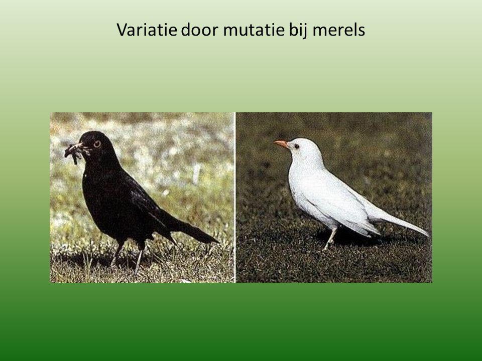 Aan de vorm van een organisme kun je veel te weten komen over zijn levenswijze en functie in het ecosysteem.ecosysteem Alle vogels hebben snavels, veren en tot vleugels omgebouwde voorpoten.