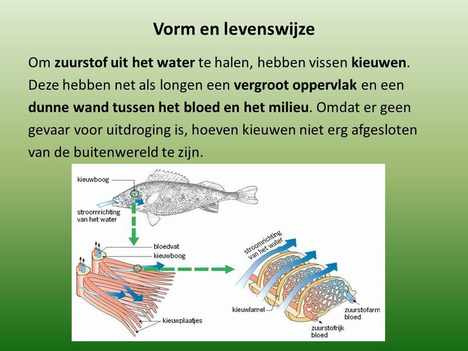 Vorm en levenswijze Om zuurstof uit het water te halen, hebben vissen kieuwen. Deze hebben net als longen een vergroot oppervlak en een dunne wand tus