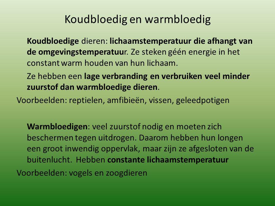 Koudbloedig en warmbloedig Koudbloedige dieren: lichaamstemperatuur die afhangt van de omgevingstemperatuur.