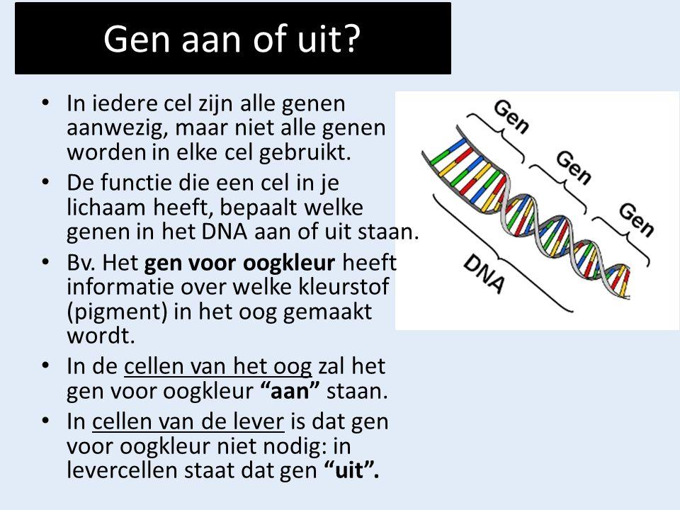 Gen aan of uit? In iedere cel zijn alle genen aanwezig, maar niet alle genen worden in elke cel gebruikt. De functie die een cel in je lichaam heeft,