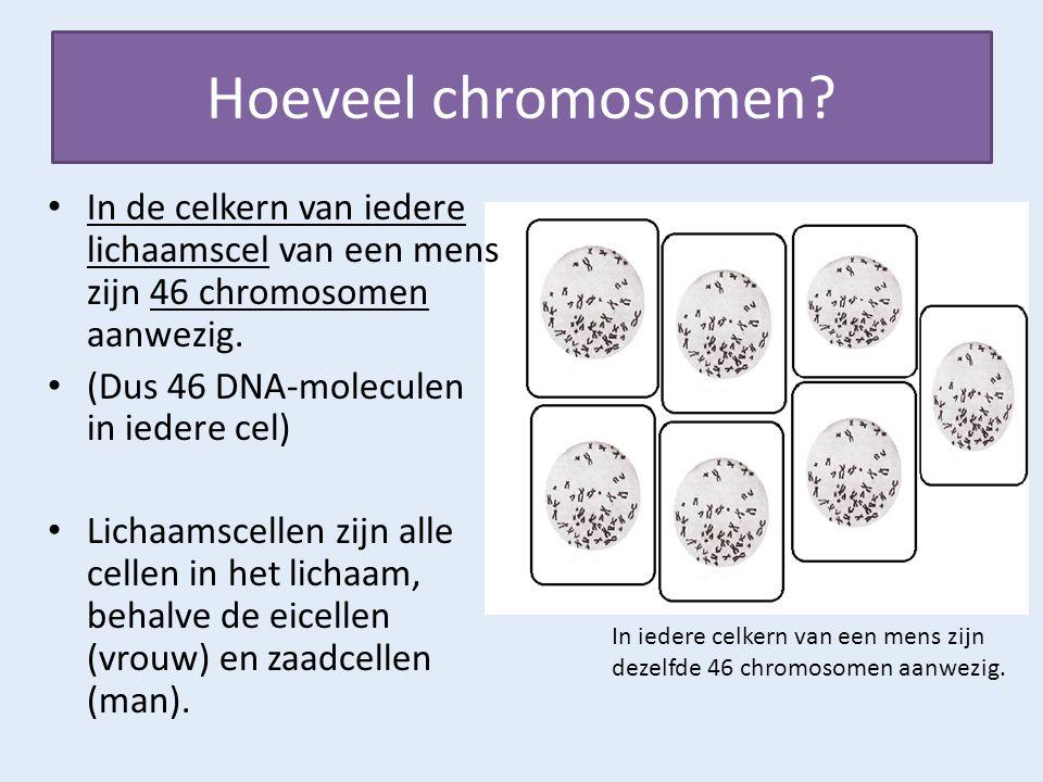 Hoeveel chromosomen? In de celkern van iedere lichaamscel van een mens zijn 46 chromosomen aanwezig. (Dus 46 DNA-moleculen in iedere cel) Lichaamscell
