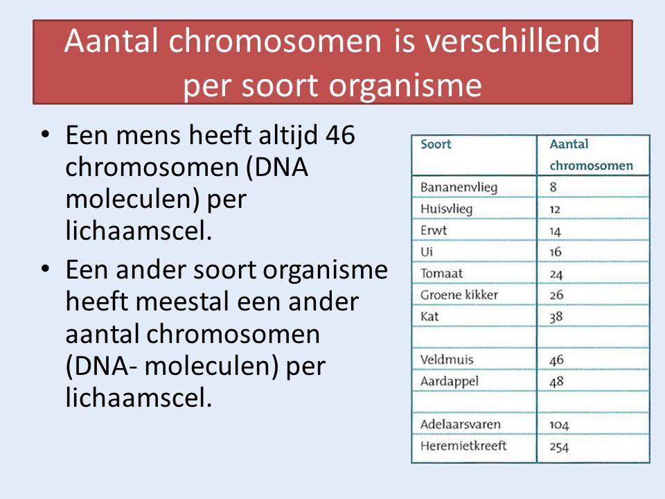 DNA krijg je van je ouders, Het bevat al je erfelijke informatie Op de 46 chromosomen in een celkern zit alle erfelijke informatie die je hebt.