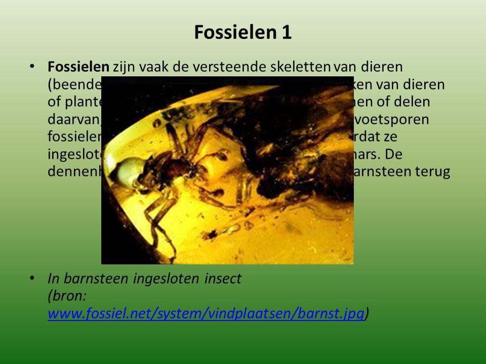 Fossielen 1 Fossielen zijn vaak de versteende skeletten van dieren (beenderen, schelpen), maar soms ook afdrukken van dieren of planten.