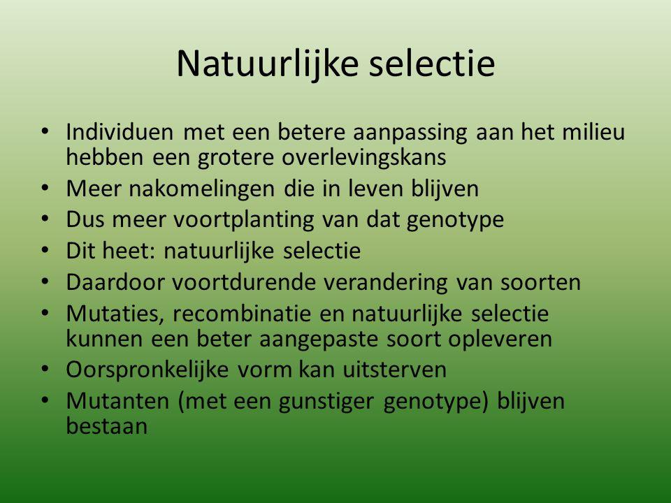 Natuurlijke selectie Individuen met een betere aanpassing aan het milieu hebben een grotere overlevingskans Meer nakomelingen die in leven blijven Dus meer voortplanting van dat genotype Dit heet: natuurlijke selectie Daardoor voortdurende verandering van soorten Mutaties, recombinatie en natuurlijke selectie kunnen een beter aangepaste soort opleveren Oorspronkelijke vorm kan uitsterven Mutanten (met een gunstiger genotype) blijven bestaan
