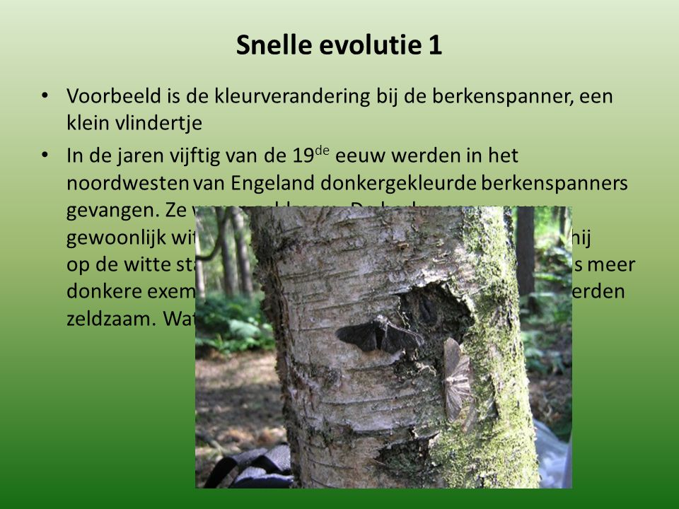 Snelle evolutie 1 Voorbeeld is de kleurverandering bij de berkenspanner, een klein vlindertje In de jaren vijftig van de 19 de eeuw werden in het noordwesten van Engeland donkergekleurde berkenspanners gevangen.