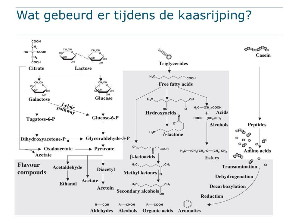 Verdeling in kaas Rand Ketonen Organische zuren Alcoholen Midden Esters Zwavel- componenten Alcoholen Bacteriën