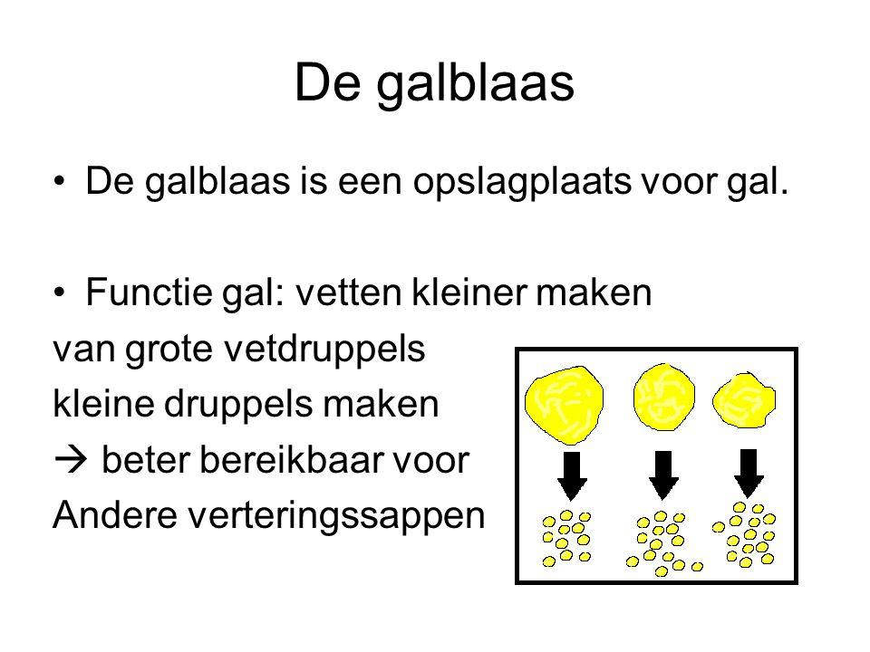 De galblaas is een opslagplaats voor gal. Functie gal: vetten kleiner maken van grote vetdruppels kleine druppels maken  beter bereikbaar voor Andere