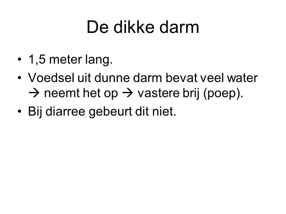 1,5 meter lang. Voedsel uit dunne darm bevat veel water  neemt het op  vastere brij (poep). Bij diarree gebeurt dit niet.