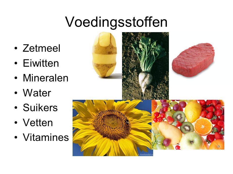 Voedingsstoffen Zetmeel Eiwitten Mineralen Water Suikers Vetten Vitamines