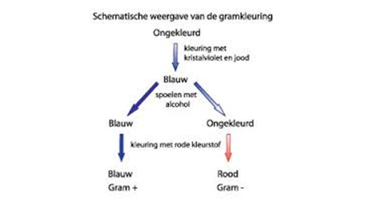 Andere indeling aeroob/ anaeroob Sommige bacteriën hebben voor hun vermeerdering veel zuurstof nodig en voor andere is zuurstof giftig.