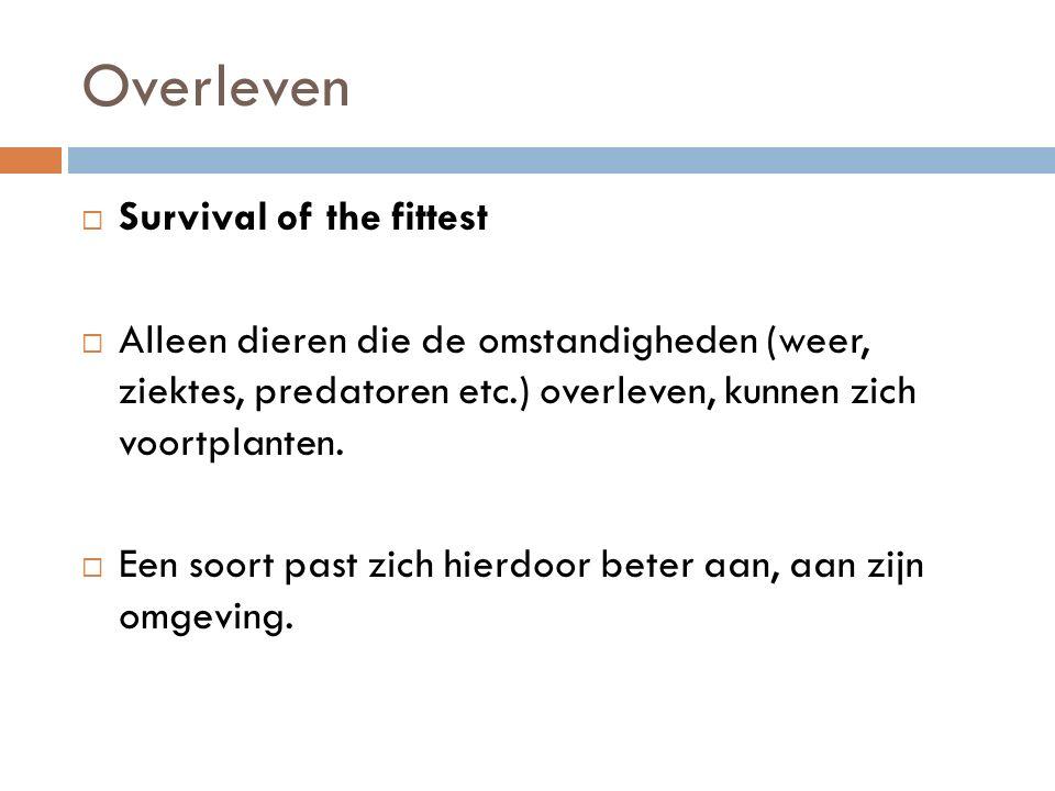 Overleven  Survival of the fittest  Alleen dieren die de omstandigheden (weer, ziektes, predatoren etc.) overleven, kunnen zich voortplanten.
