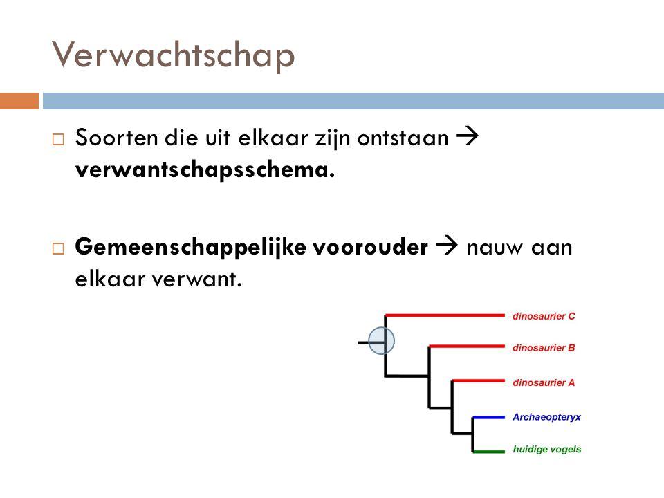 Verwachtschap  Soorten die uit elkaar zijn ontstaan  verwantschapsschema.