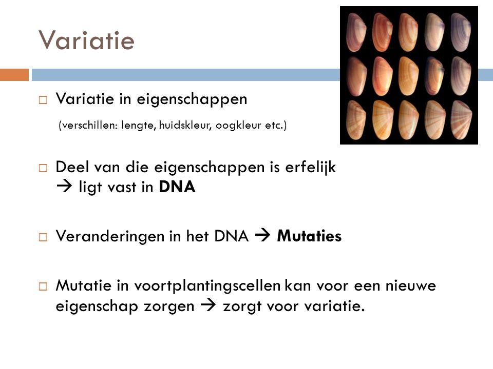 Variatie  Variatie in eigenschappen (verschillen: lengte, huidskleur, oogkleur etc.)  Deel van die eigenschappen is erfelijk  ligt vast in DNA  Veranderingen in het DNA  Mutaties  Mutatie in voortplantingscellen kan voor een nieuwe eigenschap zorgen  zorgt voor variatie.