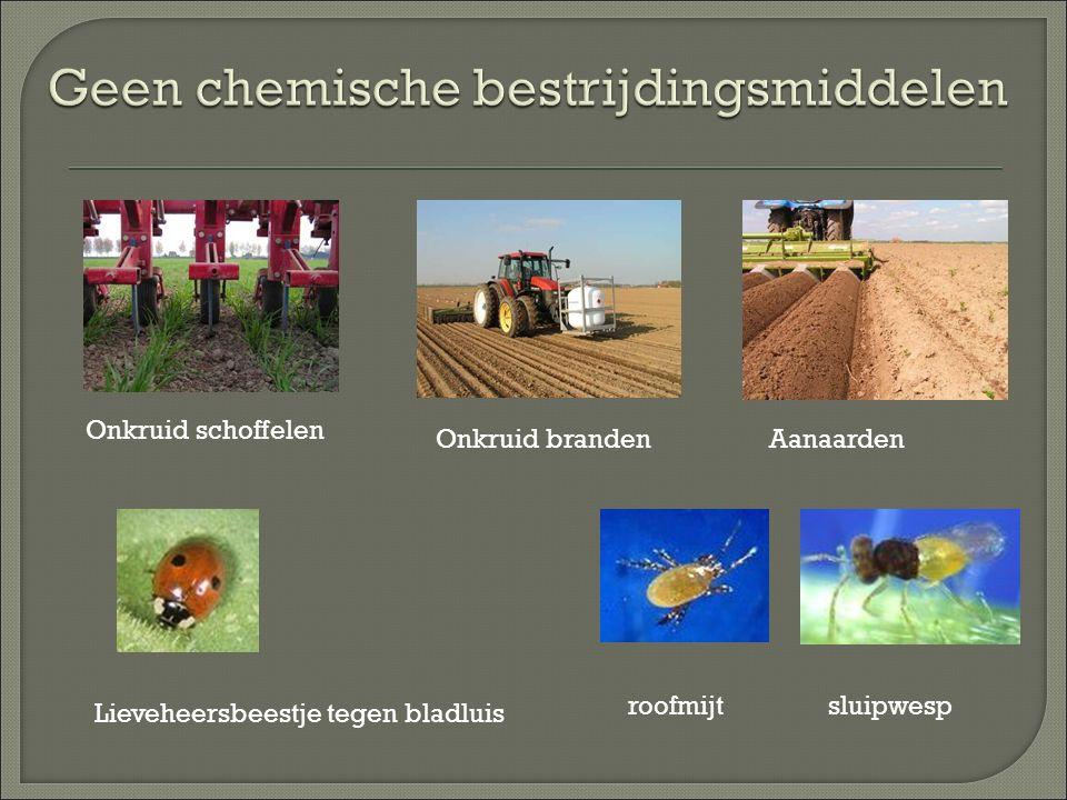 Onkruid schoffelen Onkruid brandenAanaarden Lieveheersbeestje tegen bladluis roofmijtsluipwesp