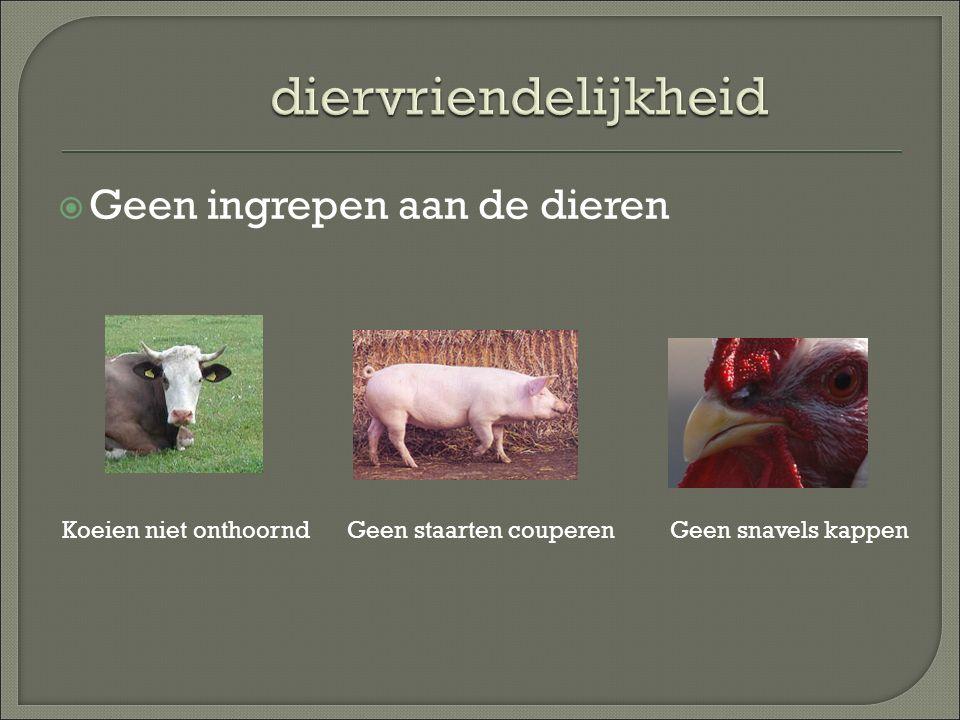  Geen ingrepen aan de dieren Koeien niet onthoorndGeen staarten couperenGeen snavels kappen