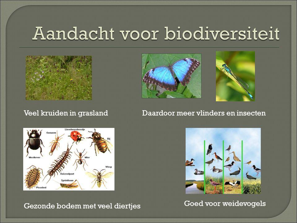 Veel kruiden in graslandDaardoor meer vlinders en insecten Gezonde bodem met veel diertjes Goed voor weidevogels