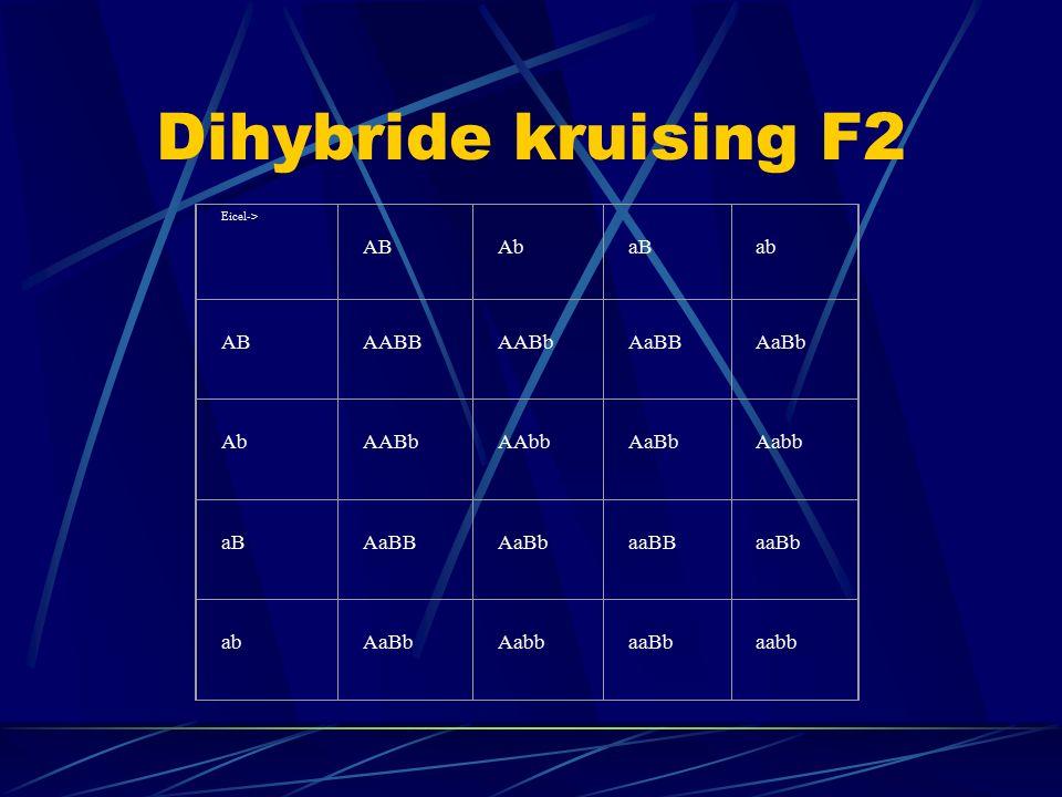 Dihybride kruising F2 Eicel-> AB Ab aB ab AB AABB AABb AaBB AaBb Ab AABb AAbb AaBb Aabb aB AaBB AaBb aaBB aaBb ab AaBb Aabb aaBb aabb