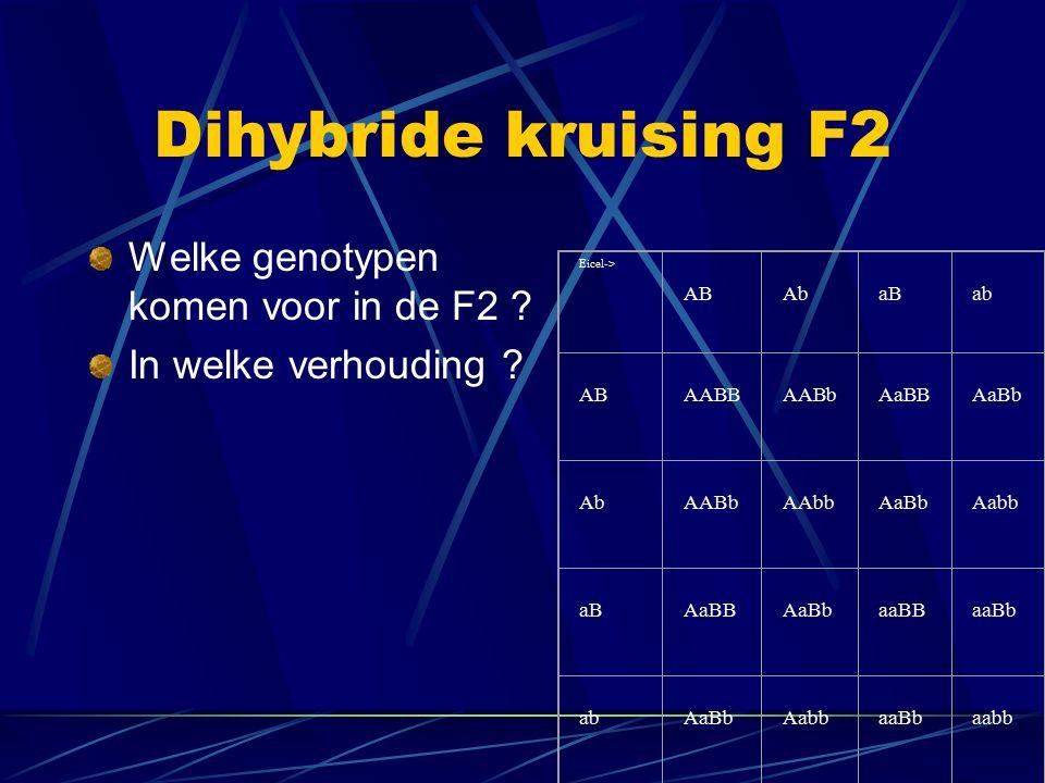 Dihybride kruising F2 Welke genotypen komen voor in de F2 ? In welke verhouding ? Eicel-> AB Ab aB ab AB AABB AABb AaBB AaBb Ab AABb AAbb AaBb Aabb aB