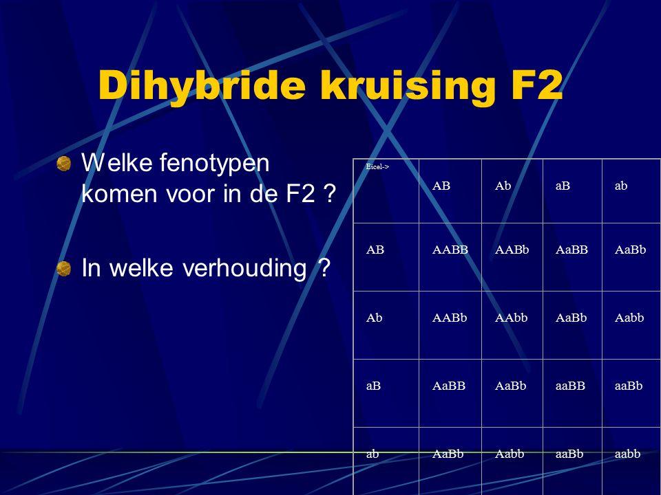 Dihybride kruising F2 Welke fenotypen komen voor in de F2 ? In welke verhouding ? Eicel-> AB Ab aB ab AB AABB AABb AaBB AaBb Ab AABb AAbb AaBb Aabb aB