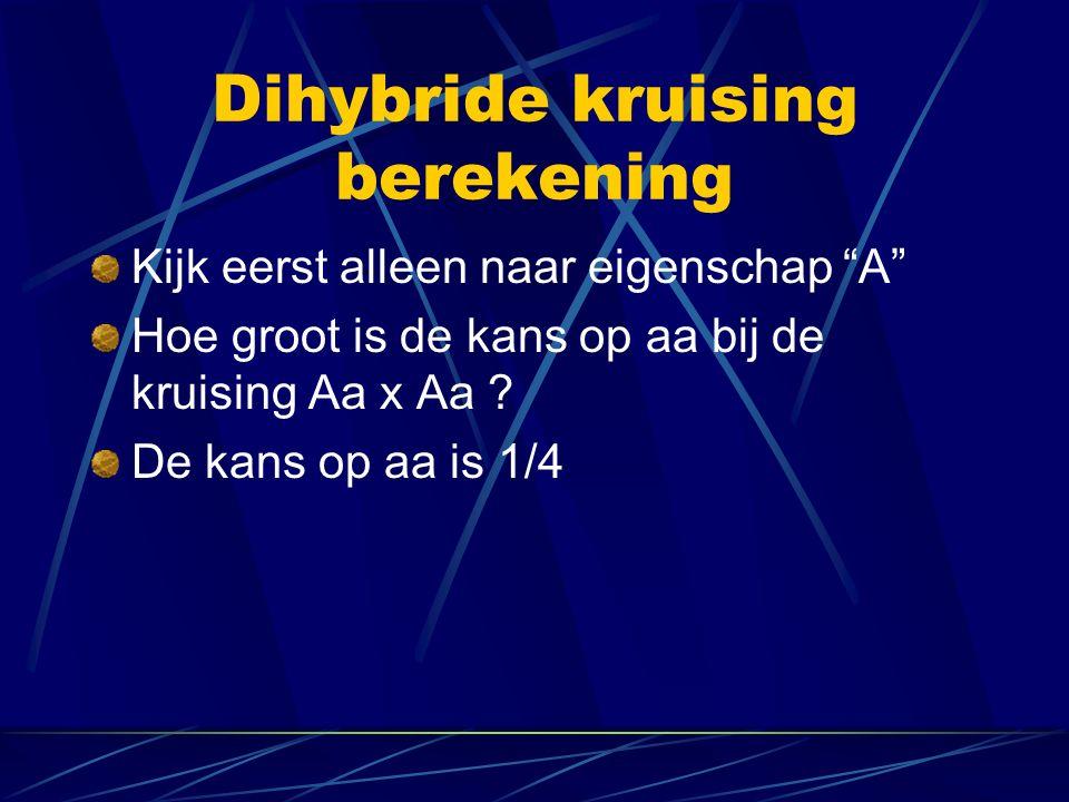 Dihybride kruising berekening Kijk eerst alleen naar eigenschap A Hoe groot is de kans op aa bij de kruising Aa x Aa .