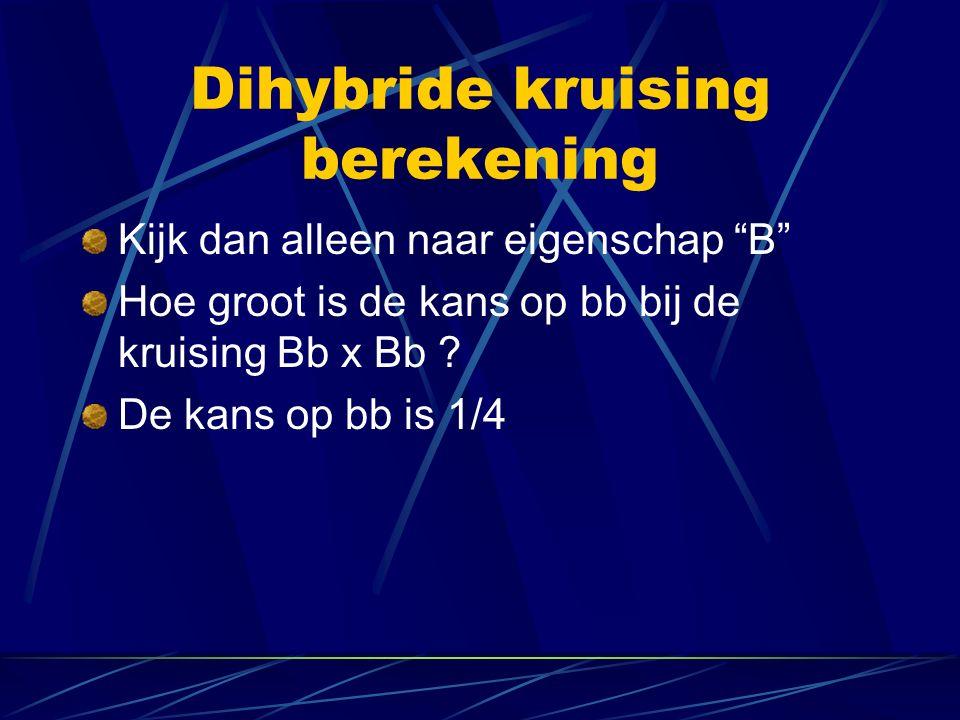 Dihybride kruising berekening Kijk dan alleen naar eigenschap B Hoe groot is de kans op bb bij de kruising Bb x Bb .