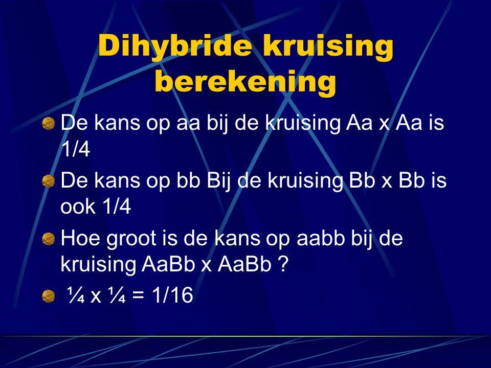 Dihybride kruising berekening De kans op aa bij de kruising Aa x Aa is 1/4 De kans op bb Bij de kruising Bb x Bb is ook 1/4 Hoe groot is de kans op aabb bij de kruising AaBb x AaBb .