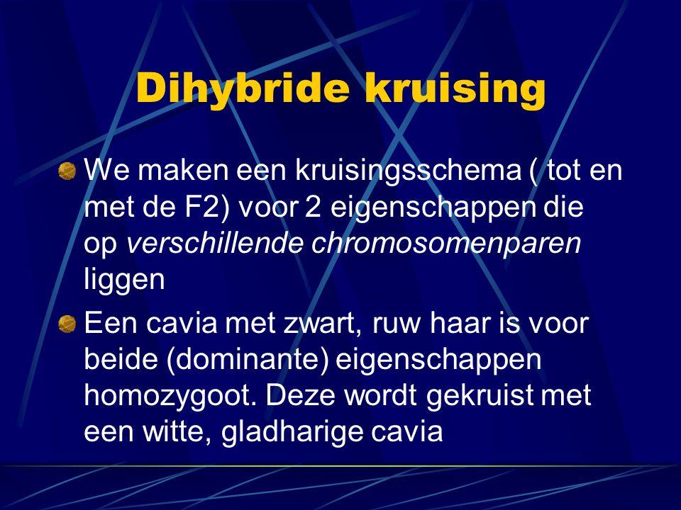 Dihybride kruising We maken een kruisingsschema ( tot en met de F2) voor 2 eigenschappen die op verschillende chromosomenparen liggen Een cavia met zwart, ruw haar is voor beide (dominante) eigenschappen homozygoot.