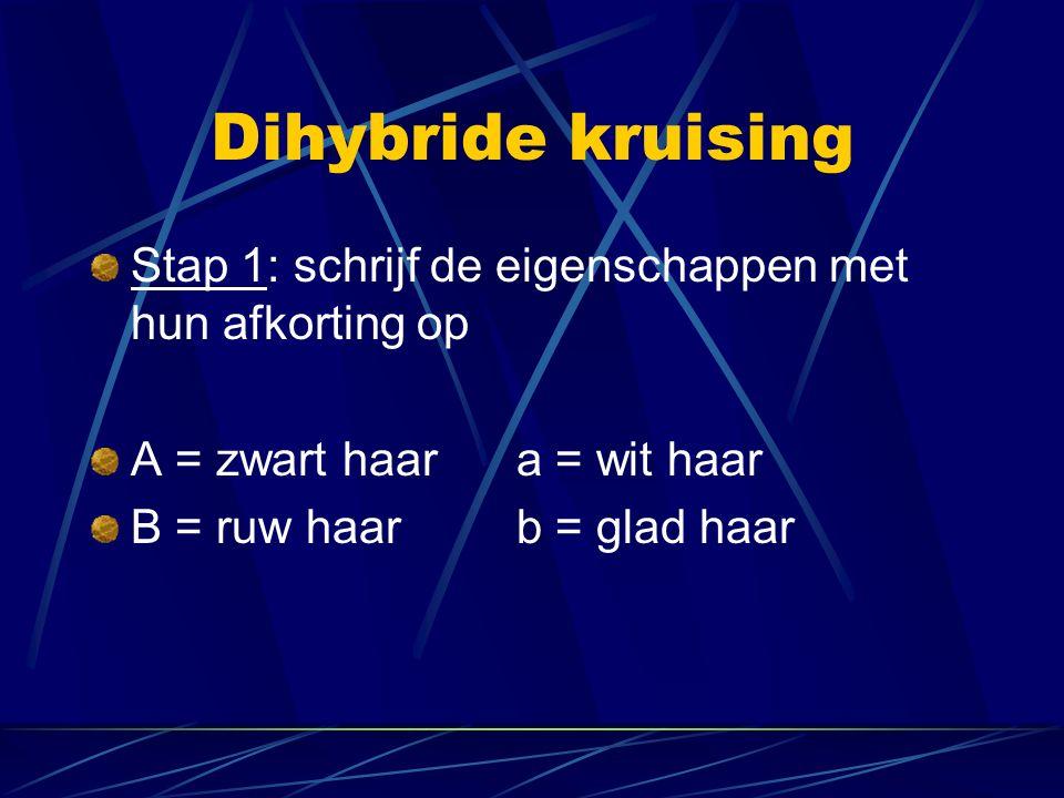 Dihybride kruising Stap 1: schrijf de eigenschappen met hun afkorting op A = zwart haara = wit haar B = ruw haarb = glad haar