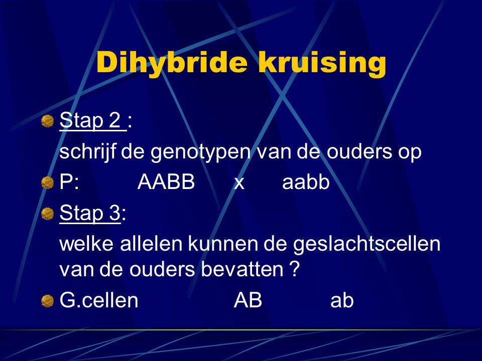 Dihybride kruising Stap 2 : schrijf de genotypen van de ouders op P:AABBxaabb Stap 3: welke allelen kunnen de geslachtscellen van de ouders bevatten .