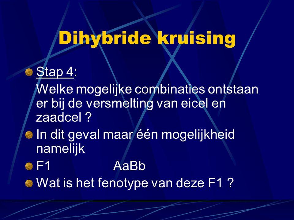 Dihybride kruising Stap 4: Welke mogelijke combinaties ontstaan er bij de versmelting van eicel en zaadcel .