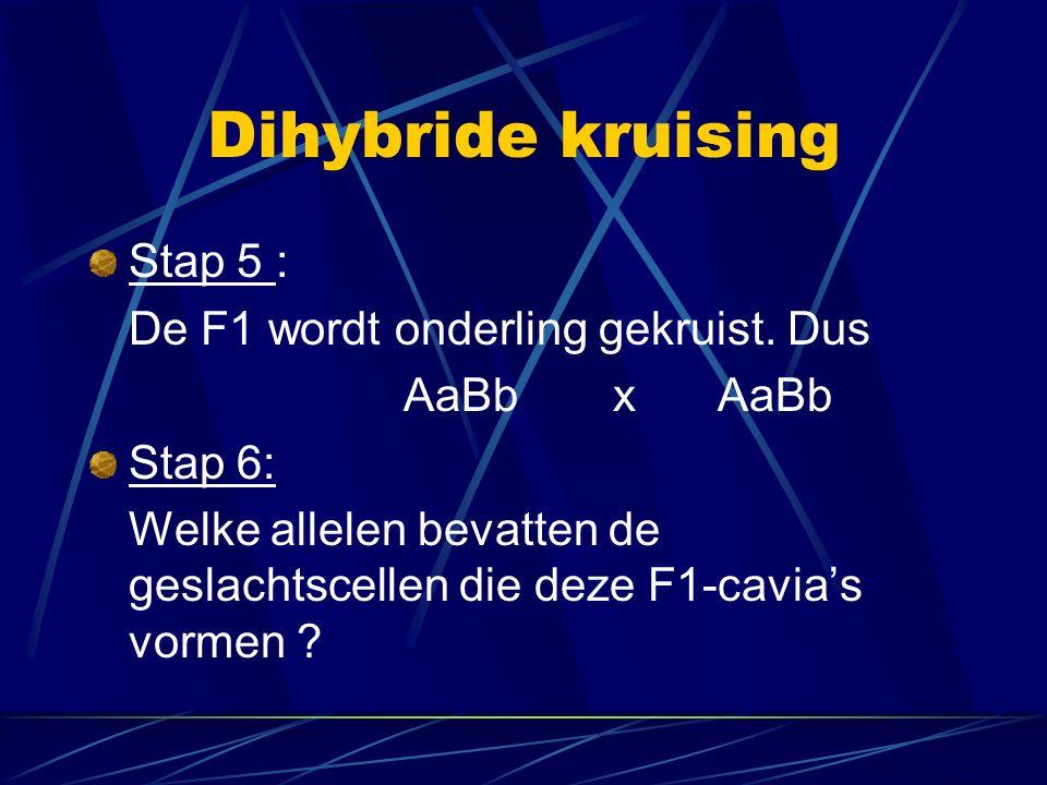 Dihybride kruising Stap 5 : De F1 wordt onderling gekruist. Dus AaBbxAaBb Stap 6: Welke allelen bevatten de geslachtscellen die deze F1-cavia's vormen