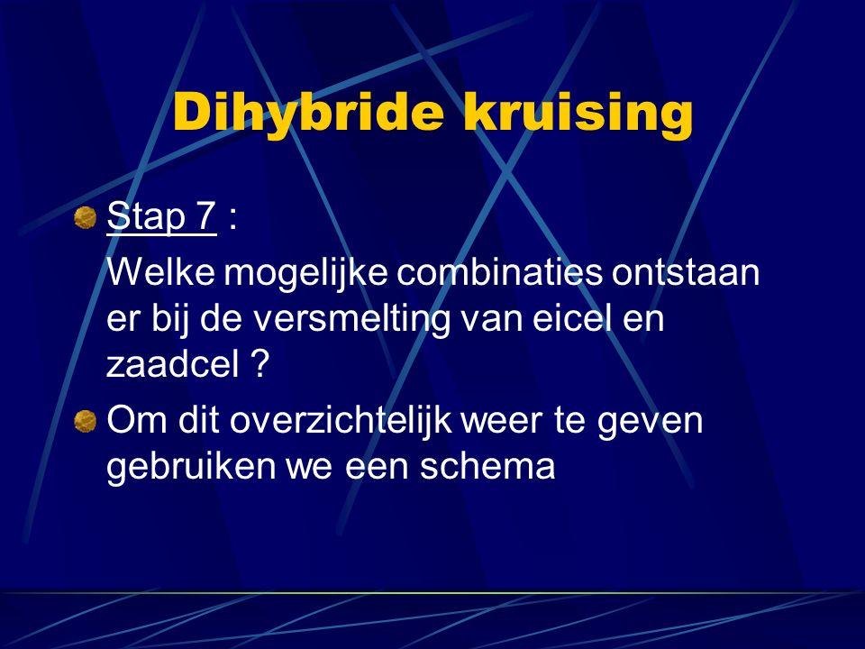 Dihybride kruising Stap 7 : Welke mogelijke combinaties ontstaan er bij de versmelting van eicel en zaadcel .