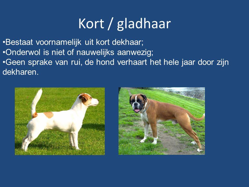 Kort / gladhaar Bestaat voornamelijk uit kort dekhaar; Onderwol is niet of nauwelijks aanwezig; Geen sprake van rui, de hond verhaart het hele jaar door zijn dekharen.