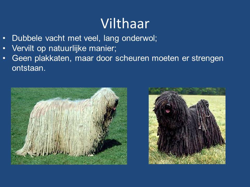 Vilthaar Dubbele vacht met veel, lang onderwol; Vervilt op natuurlijke manier; Geen plakkaten, maar door scheuren moeten er strengen ontstaan.
