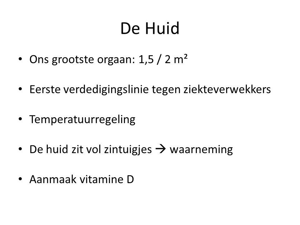 De Huid Ons grootste orgaan: 1,5 / 2 m² Eerste verdedigingslinie tegen ziekteverwekkers Temperatuurregeling De huid zit vol zintuigjes  waarneming Aanmaak vitamine D