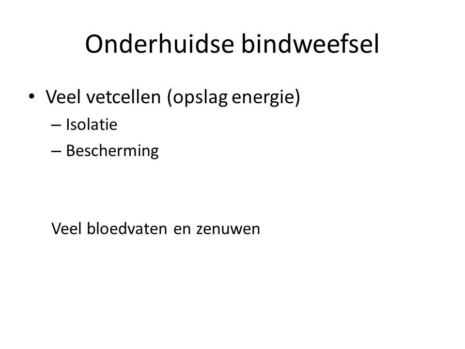 Onderhuidse bindweefsel Veel vetcellen (opslag energie) – Isolatie – Bescherming Veel bloedvaten en zenuwen