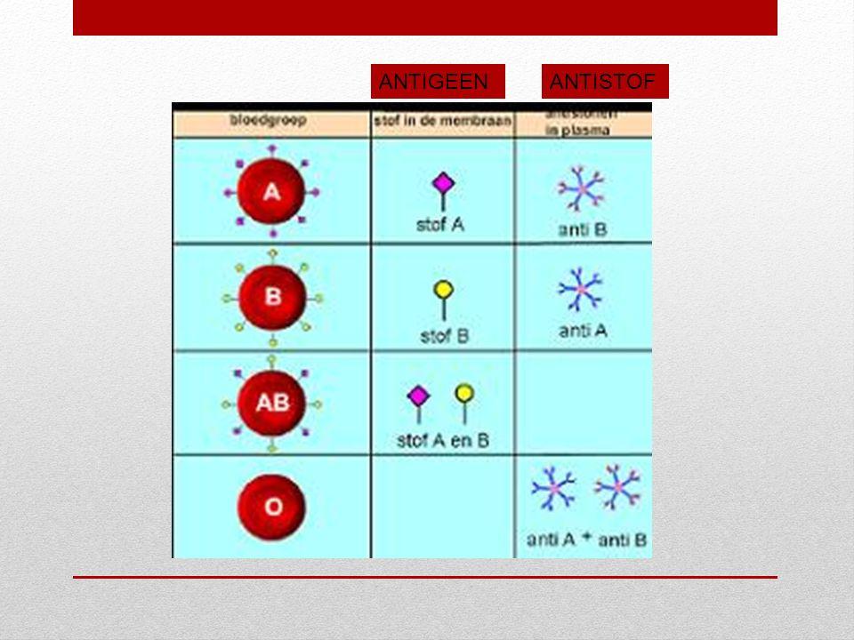 Antigeen.Antistof. Witte bloedcellen maken antistoffen tegen de antigenen die jij zelf niet hebt.