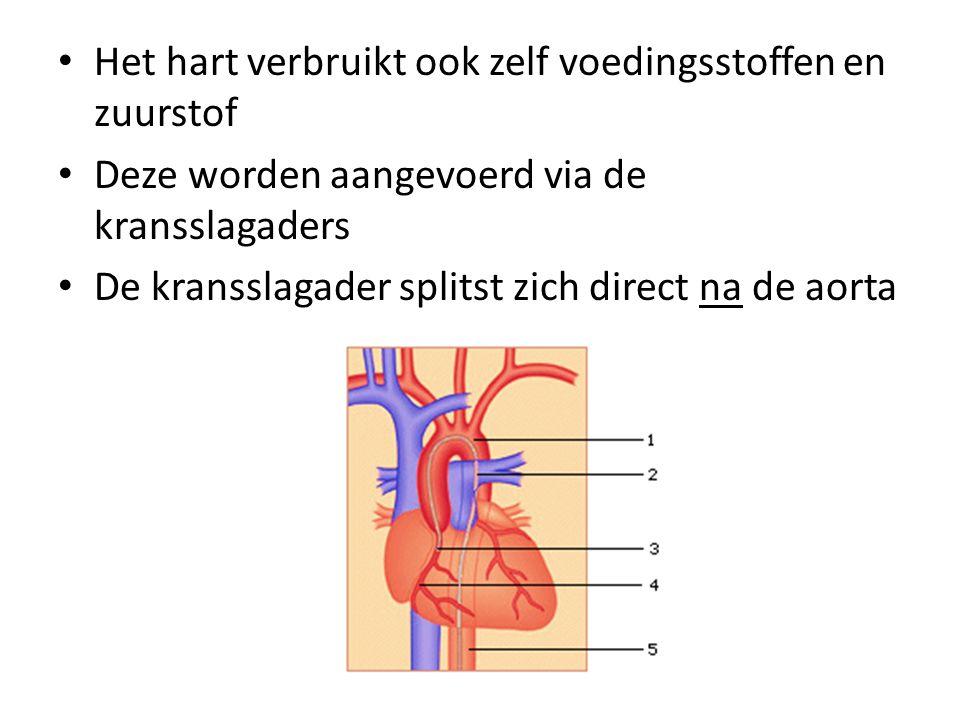 Het hart verbruikt ook zelf voedingsstoffen en zuurstof Deze worden aangevoerd via de kransslagaders De kransslagader splitst zich direct na de aorta