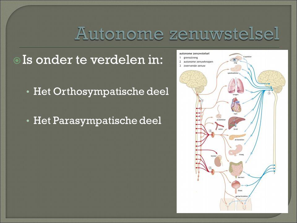  Is onder te verdelen in: Het Orthosympatische deel Het Parasympatische deel