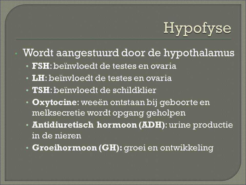 Wordt aangestuurd door de hypothalamus FSH: beïnvloedt de testes en ovaria LH: beïnvloedt de testes en ovaria TSH: beïnvloedt de schildklier Oxytocine