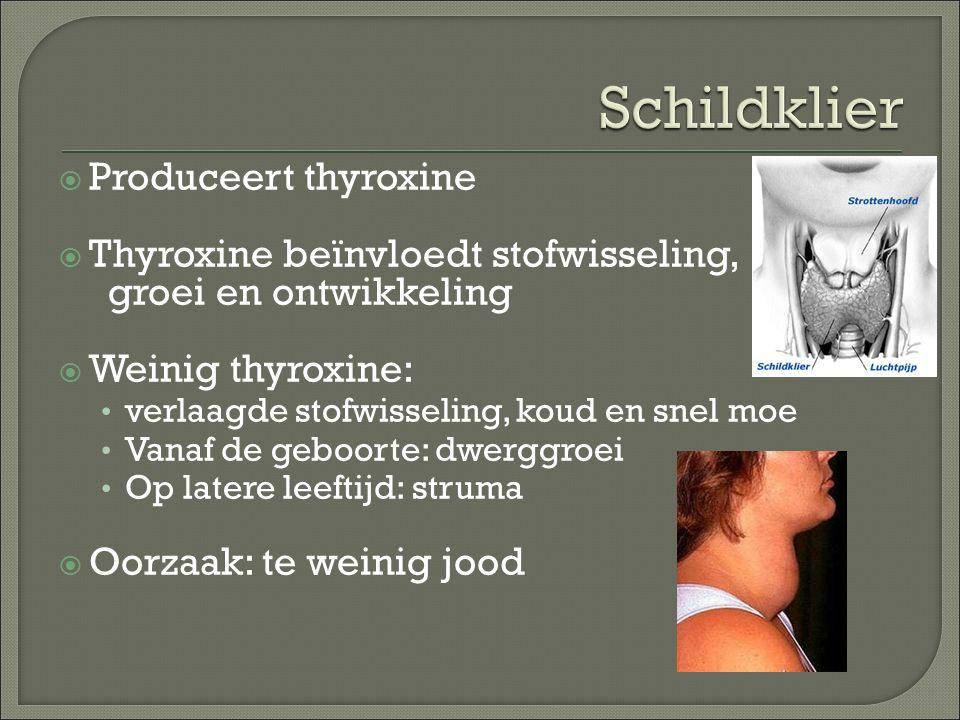  Produceert thyroxine  Thyroxine beïnvloedt stofwisseling, groei en ontwikkeling  Weinig thyroxine: verlaagde stofwisseling, koud en snel moe Vanaf