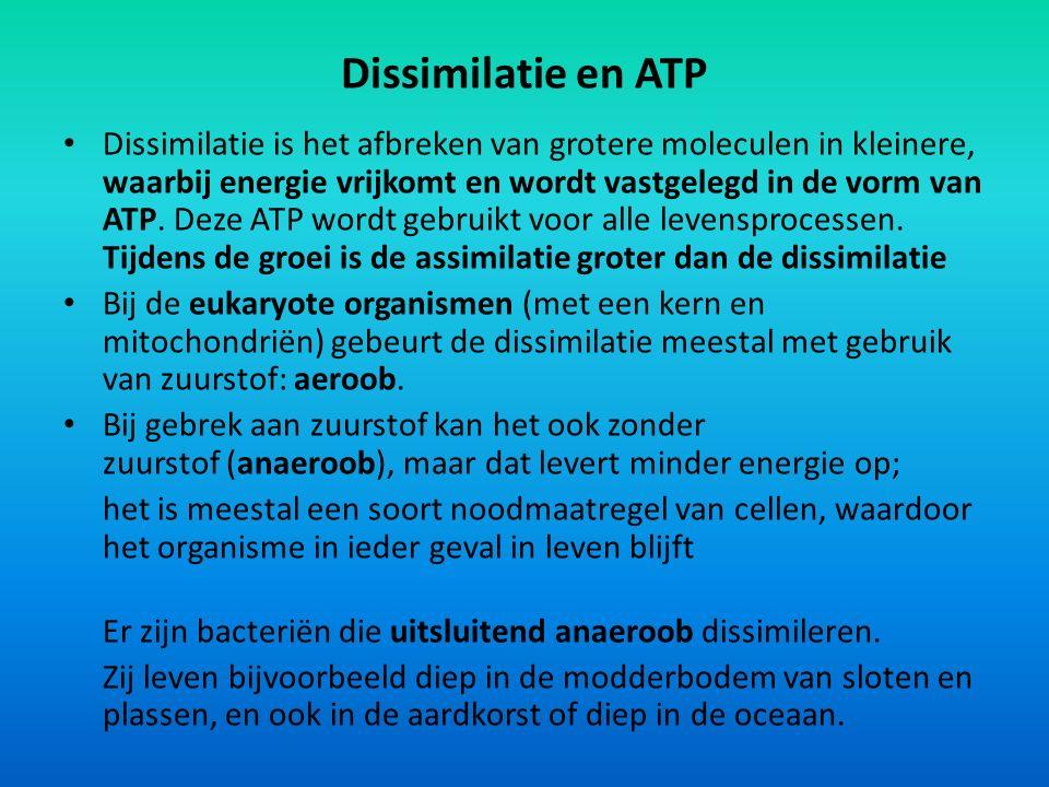 Dissimilatie en ATP Dissimilatie is het afbreken van grotere moleculen in kleinere, waarbij energie vrijkomt en wordt vastgelegd in de vorm van ATP.