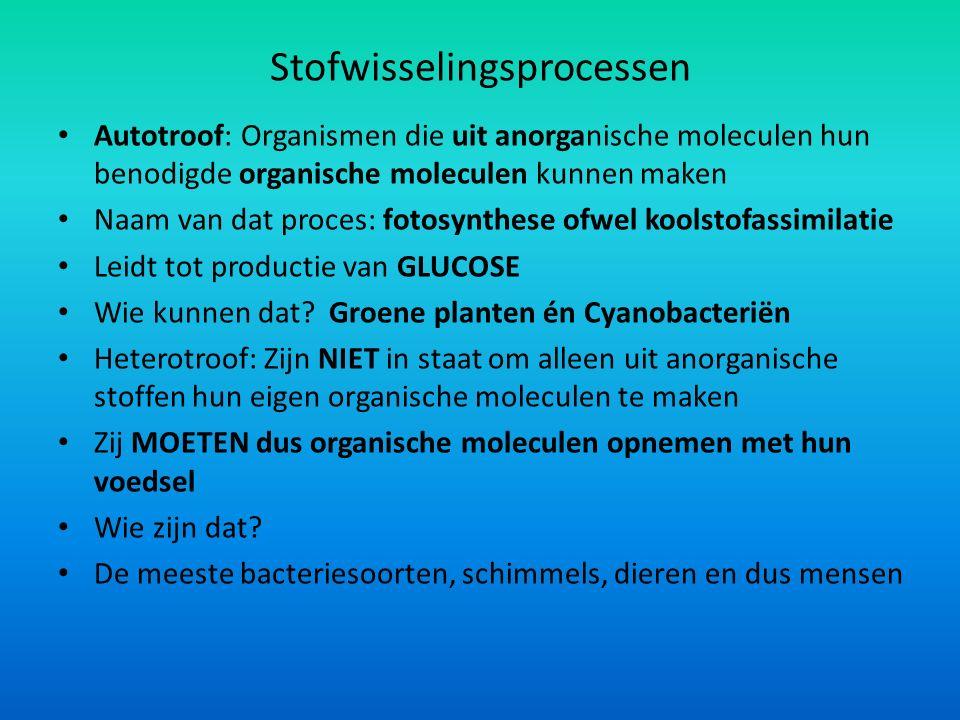 Stofwisselingsprocessen Autotroof: Organismen die uit anorganische moleculen hun benodigde organische moleculen kunnen maken Naam van dat proces: fotosynthese ofwel koolstofassimilatie Leidt tot productie van GLUCOSE Wie kunnen dat.