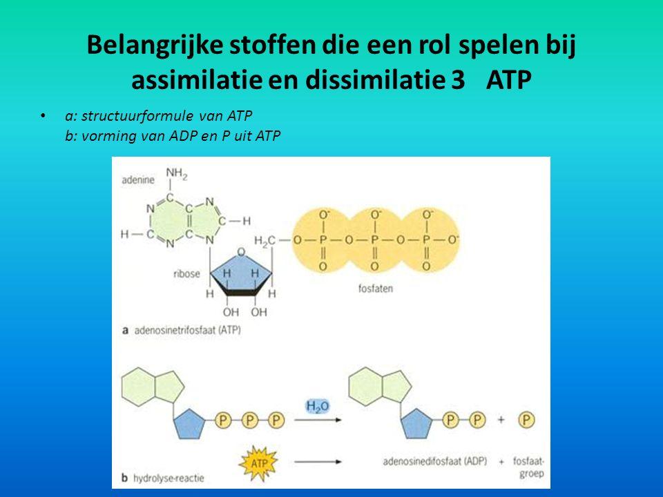Belangrijke stoffen die een rol spelen bij assimilatie en dissimilatie 3 ATP a: structuurformule van ATP b: vorming van ADP en P uit ATP