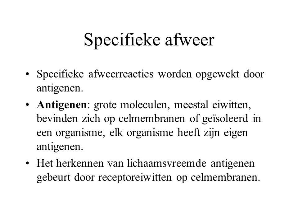 Specifieke afweer Specifieke afweerreacties worden opgewekt door antigenen. Antigenen: grote moleculen, meestal eiwitten, bevinden zich op celmembrane