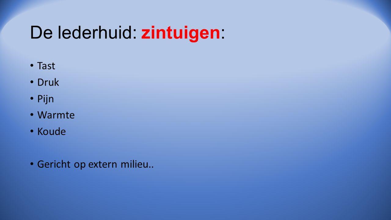 De lederhuid: zintuigen: Tast Druk Pijn Warmte Koude Gericht op extern milieu..